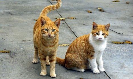 feeding multiple cats
