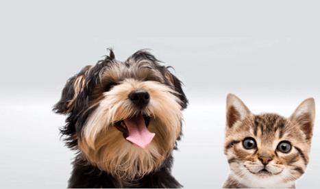 Popular pet names