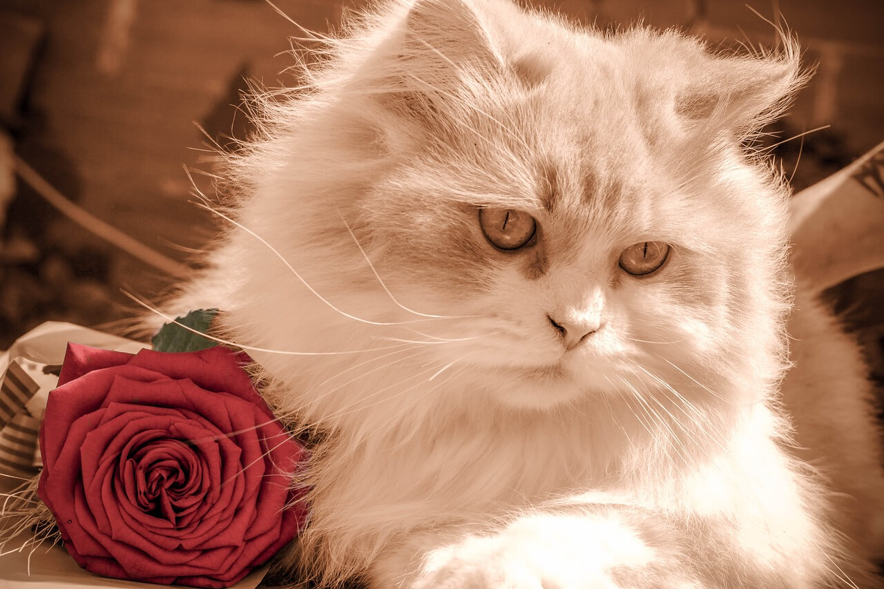 Gifts for your cat this Valentine's Day - Argos Pet Insurance