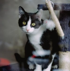 Black and white cat on a high-up scratching post