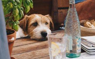 Dog at a picnic table