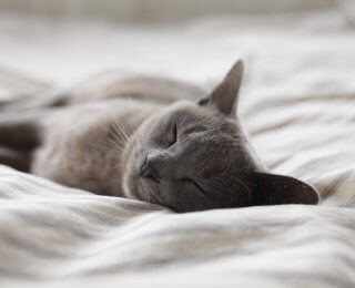 Grey cat asleep on a bed
