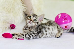 Kitten with pink mouse and ball toys