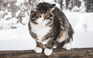 Our Favourite Christmas Foods Can Be Bad For Our Pets!