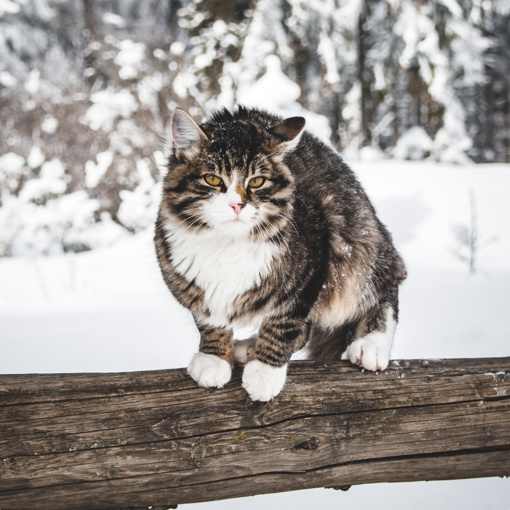 Everything You Need To Know About Your Cat S Health This Winter Argos Pet Insurance