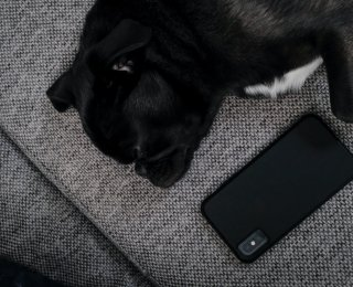 Dog and phone