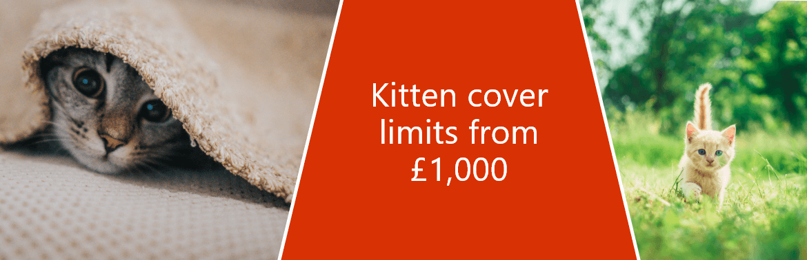Collage image that includes a close-up images of kittens along with the quote 'Kitten cover limits from £1000'